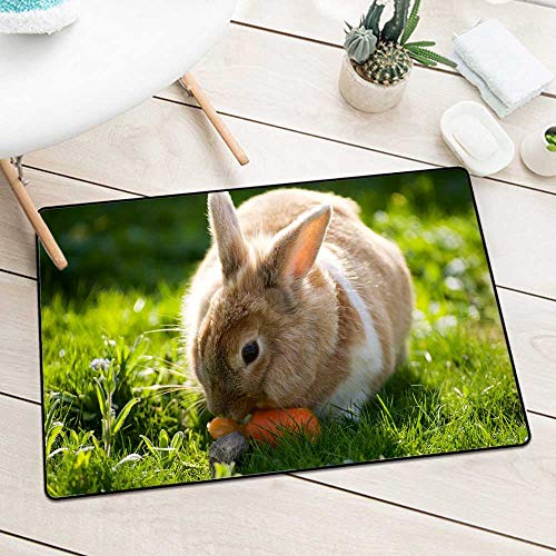 Ivory Leaf Scroll Wallpaper - BCVHGD Inlet Outdoor Door mat 996590 Rabbits Grass Animals Wallpapers Catch dust Snow and mud W31.5 x L47.2 Inch