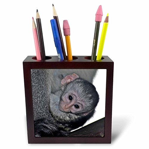 Black Faced Vervet Monkey - 3dRose ph_9868_1 Black Faced Vervet Monkey Masai Mara National Park Kenya Africa-Tile Pen Holder, 5-Inch