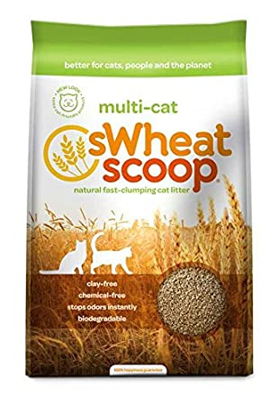 Image result for swheat scoop