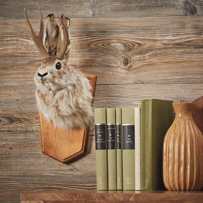 Kotulas Jackalope Wall Mount - Rabbit with Antlers -
