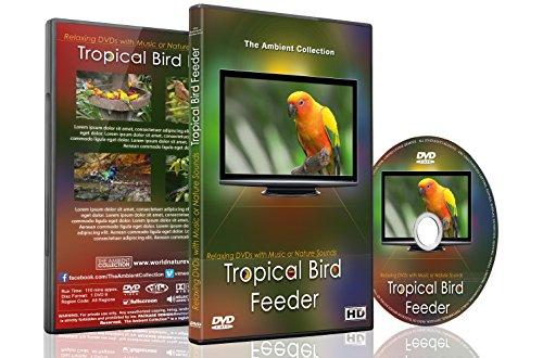 DVD de pájaros relajantes – Alimentador de pájaros tropicales – Lindo y colorido pájaros con sonidos de pájaros...