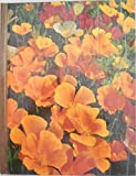 img - for Annuals. The Time-Life Encyclopedia of Gardening book / textbook / text book