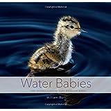 Water Babies: The Hidden Lives of Baby Wetland Birds