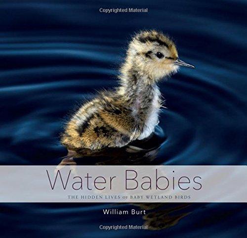 water babies book - 8