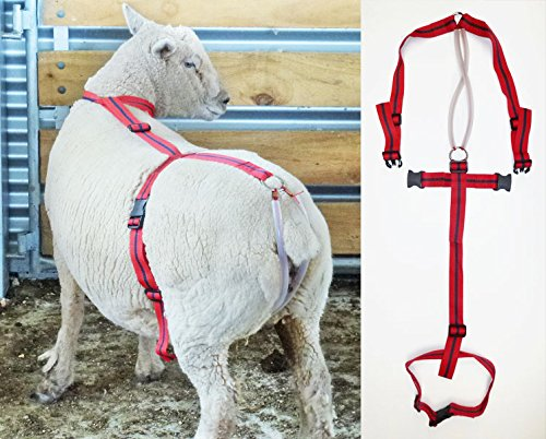 BEARIN Sheep and Goat Prolapse Harness by Rurtec, Bearing Retention Aid, Made in New Zealand