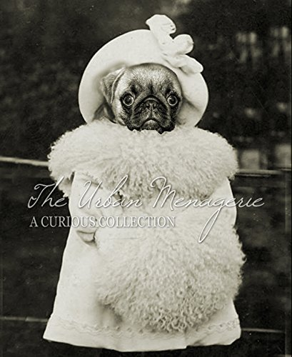 Anthropomorphic Portrait, Pug with Muff Art Print, Multiple Sizes Available, Unframed (Cute Pugs In Costumes)