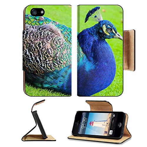 MSD Premium Apple iPhone 5 iphone 5S Flip Pu Leather Wallet Case Colorful Blue Peacock at Rest with Green Background at Beacon Hill Park Vancouver iPhone5 IMAGE - Vancouver Glasses Eye