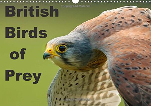 Natural Dalyn (British Birds of Prey 2017: Birds of Prey Found in the United Kingdom (Calvendo Animals))