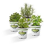 Bonnie Plants Cup Of Tea Plant Garden - 4 Pack Live Plants | 12 - 36 Inch Tall Plants | Peppermint, Lavender, Lemon Balm & Spearmint