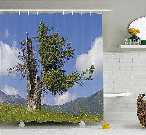 Nature Shower Curtain by Ambesonne, Old Spruce Tree Coming Back to Life from Death in Summer Meadow Country Image, Fabric Bathroom Decor Set with Hooks, 70 Inches, Blue Olive Green (Spruce Cabin Meadows)