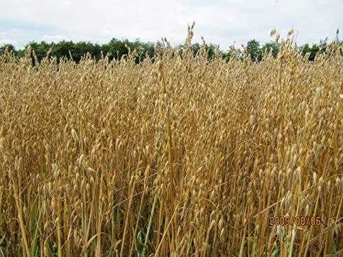 5 lb Whole Oat Seeds, Wildlife, Deer, Food Plot