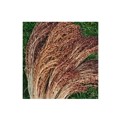 Sorghum (Broom Corn) Broom Corn Red Head 2.000 seeds: Home & Kitchen