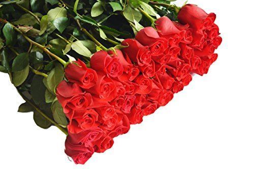 Farm2Door Wholesale Roses: 50 Stems of Long Stemmed (50cm) Red Roses from Colombia - Farm Direct Wholesale Fresh Flowers
