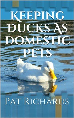 Keeping Ducks As Domestic Pets