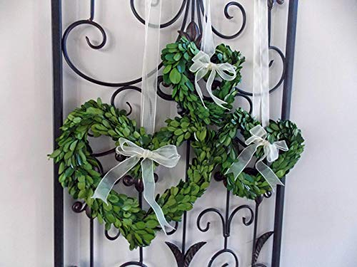 Preserved Boxwood Heart Shaped Mini Wreath for Valentines Mothers Day Gift, Housewarming, Wedding Pews, Rustic Farmhouse Style Home Decor, Green w/Sheer Ivory Ribbon, Handmade, Choose 8
