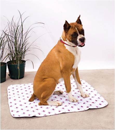PoochPad for Mature Dogs, Medium 20-Inch by 27-Inch by PoochPads