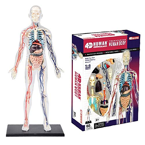 (Human Body Model Anatomy Models Set, Hosss 1:6 Whole-Body Transparent 4D Human Organs Nerve and Vascular Anatomy Model, Medical Teaching Toy Human Model Home Decoration)