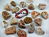 20 Rock Climbing Holds, Small (1'' to 2'' Used to add Difficulty to a Wall) Pinch Holds are Advanced Climbers. Rock Wall Holds, Rock Climbing Equipment