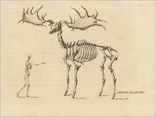 Posterlounge Acrylic print 40 x 30 cm: Skeleton of an extinct Irish elk, Megaloceros giganteus by William Home Lizars/Fotofinder.com