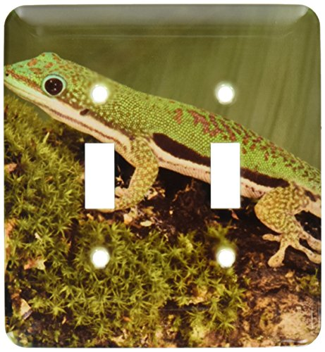 Gecko Lined Day - 3dRose lsp_94201_2 Lined Day Gecko Lizard Double Toggle Switch, Multicolor
