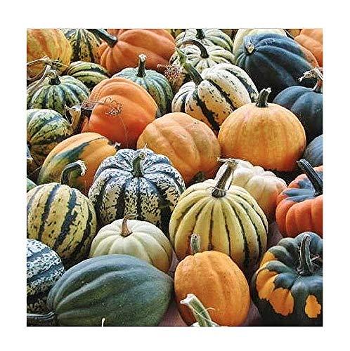 Autumn Acorn Blend Winter Squash Seeds (Autumn Decorative Squash)
