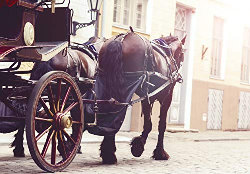 - Horse and Carriage Ride for Two in Paris - Tinggly Voucher/Gift Card in a Gift Box