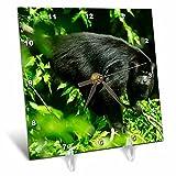 3dRose Danita Delimont - Primates - Mexico. Alouatta palliata mexicana, Mexican Howler Monkey. - 6x6 Desk Clock (dc_258485_1)