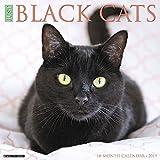 Just Black Cats 2019 Wall Calendar
