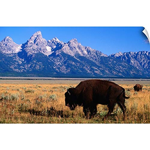 Wall Peel Wall Art Print Entitled American Bison on Antelope Flats, with Teton Range Beyond 18