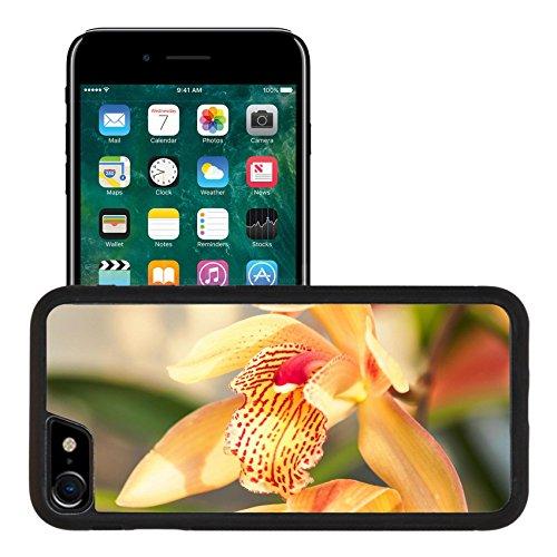 Liili Apple iPhone 7 iPhone 8 Aluminum Backplate Bumper Snap iphone7/8 Case iPhone6 ID: 27535029 Spring flowers Beautiful Cymbidium orchid in (Gold Cymbidium)