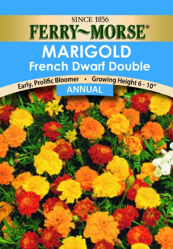 Ferry-Morse-French-Marigold-Double-Dwarf-Seeds-Annual