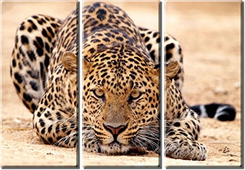 Picture Sensations Framed Huge 3-Panel Amazing Animal Leopard Giclee Canvas Print by Picture Sensations