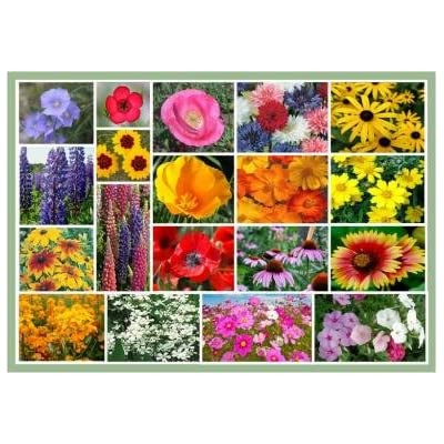 Full Sun Wildflowers - 20 Varieties of Annual and Perennial Flowering Plants : Garden & Outdoor