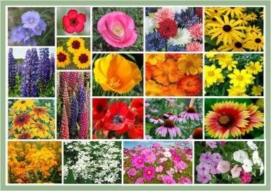 Amazon Com Full Sun Wildflowers 20 Varieties Of Annual And