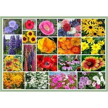 Amazon full sun wildflowers 20 varieties of annual and full sun wildflowers 20 varieties of annual and perennial flowering plants mightylinksfo