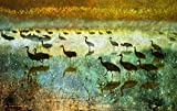 Wall Art Print entitled Dawn At The Flight Deck / Sandhill Cranes by R Christopher Vest | 24 x 15