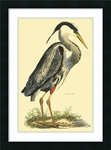 Framed Art Print 'Great Blue Heron' by Prideaux John Selby by Amanti Art