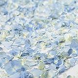 Farm Fresh Natural Blue Hydrangea Petals - 16 PK.
