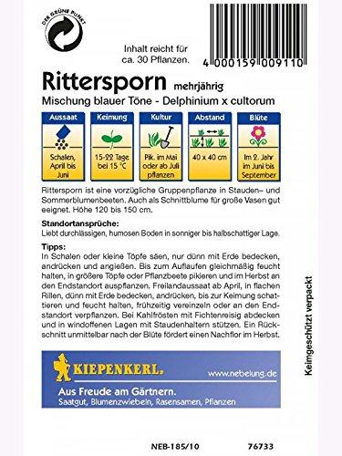 Delphinium Rittersporn mehrj/ährige Mischung