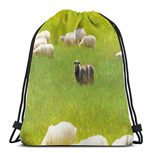 Unisex Drawstring Bag Gym Bags Storage Backpack,Black Sheep Between White Goats On Grass Field Meadow Animal Farm Landscape ()