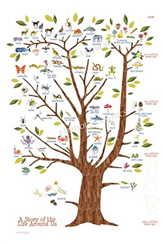Tree Of Life Poster Print Nursery Wall Art Kids Wall Art Natural History Of  Existing Life