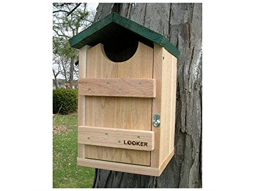 (Songbird Essentials Screech Owl House Nest Box)