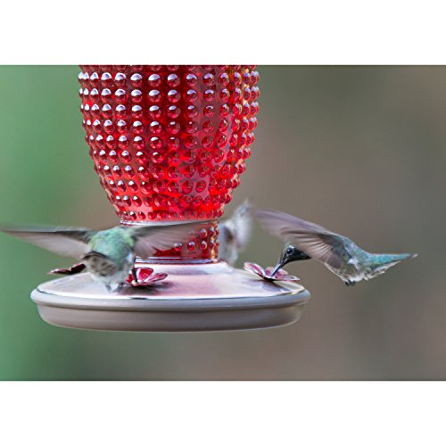 Perky-Pet Red Hobnail Vintage Glass Hummingbird Feeder 8130-2 by Perky-Pet (Image #2)