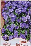 Blue Flower Aubrieta Cultorum Seeds Violet Queen Flower Seeds Easy Grow Original Package 50 Seed/pack
