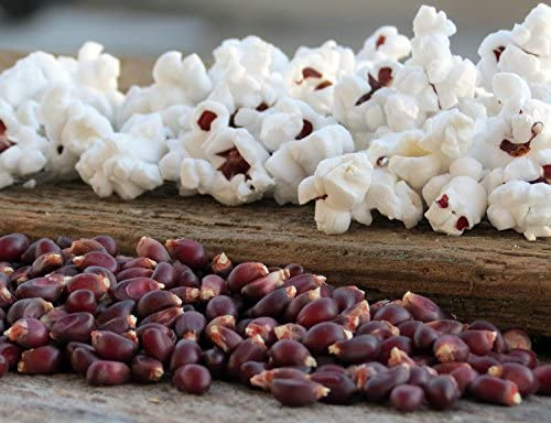 Amazon.com: Ruby Red Popcorn 40 semillas – Ideal para el ...