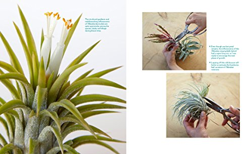 Air Plants: The Curious World of Tillandsias by Workman Publishing/Timber Press (Image #5)