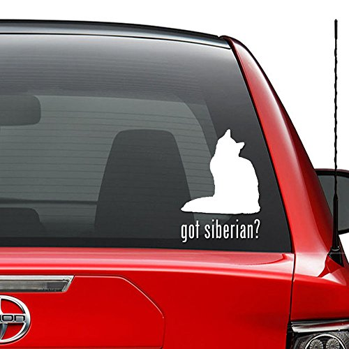 Got Siberian Cat Kitty Pet Vinyl Decal Sticker Car Truck Vehicle Bumper Window Wall Decor Helmet Motorcycle and More - Size (7 inch / 18 cm Tall) / (Color Gloss White)