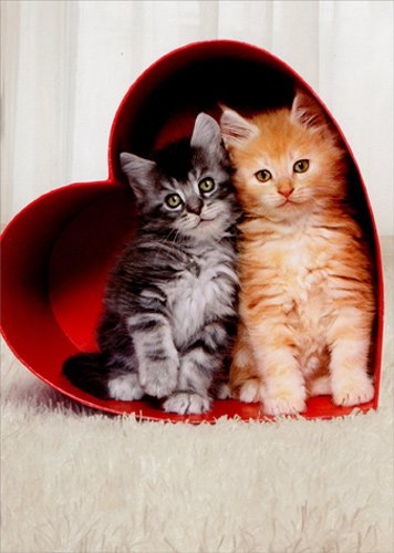 Two Kittens In Heart Box - Avanti Cat Valentine's Day Card