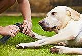 Segawoot Pet Nail Grinder, Dog Nail Grooming