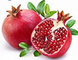 Pomegranate Tree Seeds - Plant Your Own Supply of Delicious and Nutritious Fruit